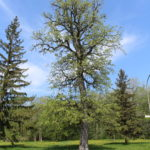 Éco-quartier Mercier-Hochelaga-Maisonneuve